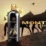 Montale - Arabians Tonka